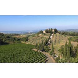 Brunello di Montalcino  Docg 2012 Castel giocondo - Frescobaldi